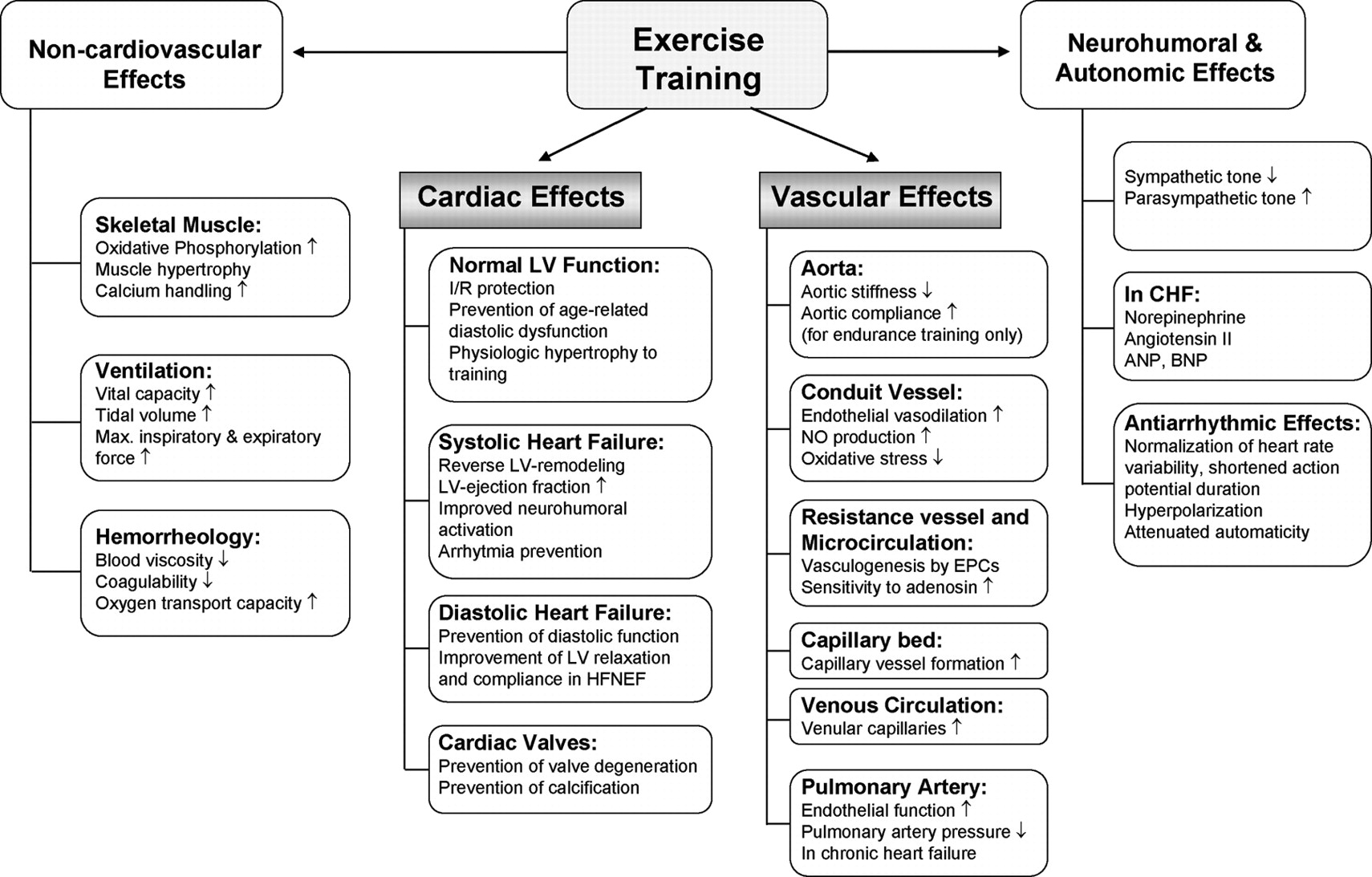 Cardiovascular Effects Of Exercise Training Molecular Mechanisms