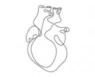 heart-vascular-health1-190x155